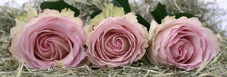 ROSE-MATRIMONIO2
