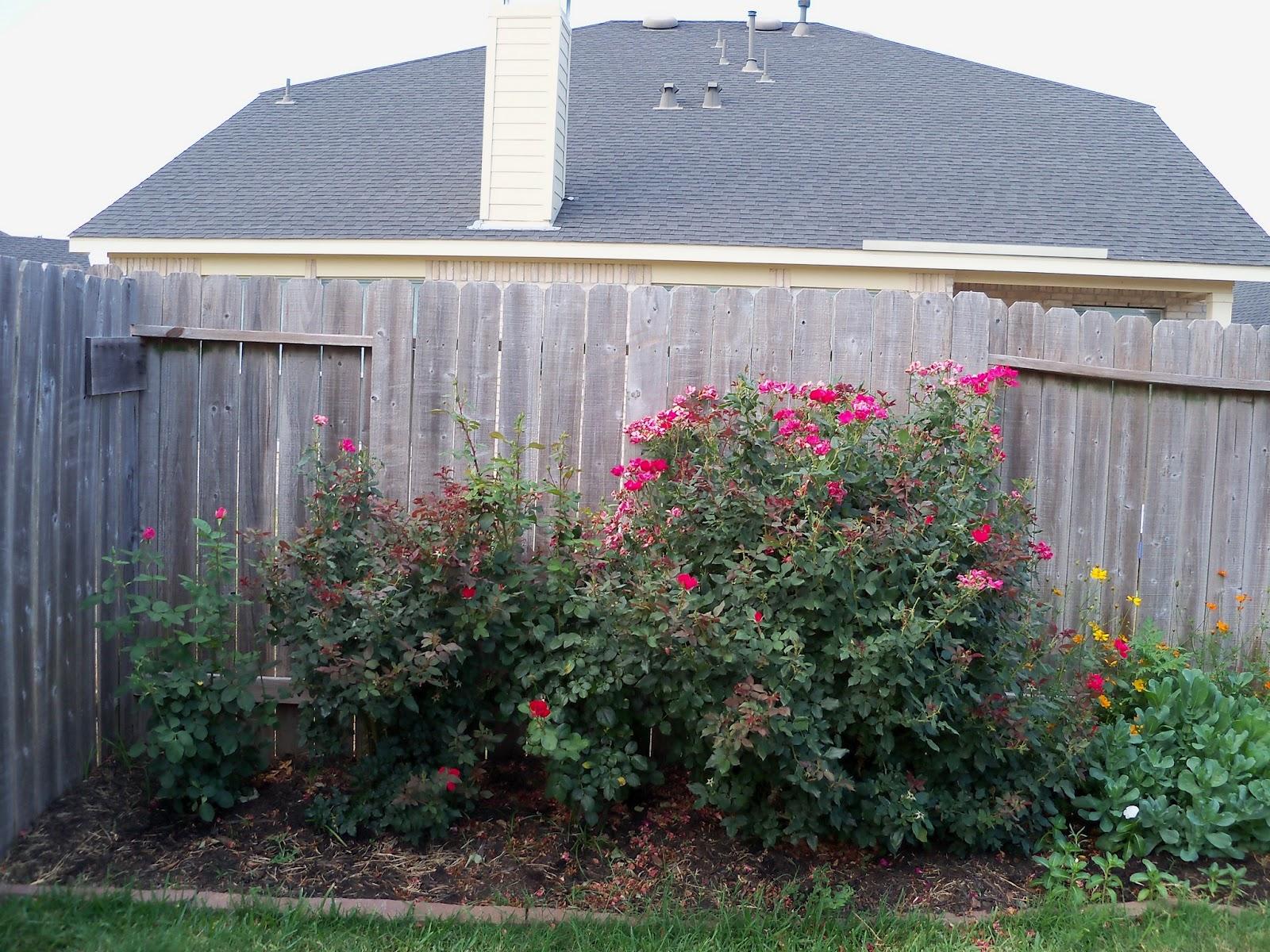 Gardening 2011 - 100_8819.JPG