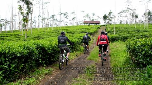 Meskipun jalannya menanjak, pemandangan kebun teh membuat kami tidak mudah lelah.