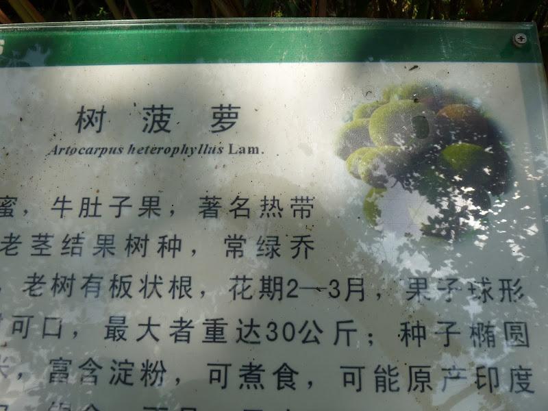 Chine .Yunnan . Lac au sud de Kunming ,Jinghong xishangbanna,+ grand jardin botanique, de Chine +j - Picture1%2B624.jpg