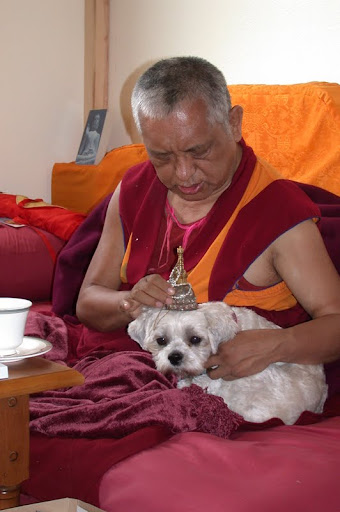 Lama Zopa Rinpoche blessing dog with Buddhas relics in Washington, USA