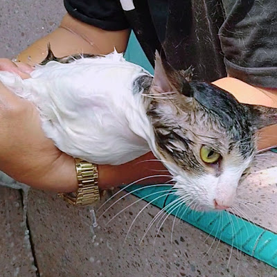 bestspy.id 5 Aktivitas Menyenangkan Untuk Kucing Peliharaan