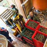 2013 vendange du chenin. guimbelot.com - 2013%2B10%2B12%2BGuimbelot%2Bvendange%2Bdu%2Bchenin%2Bmoelleux%2B125.jpg