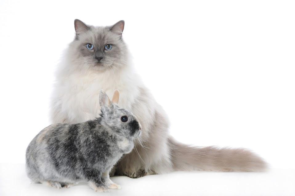 Un studio photo professionnel pour faire de votre animal for Animalerie truffaut