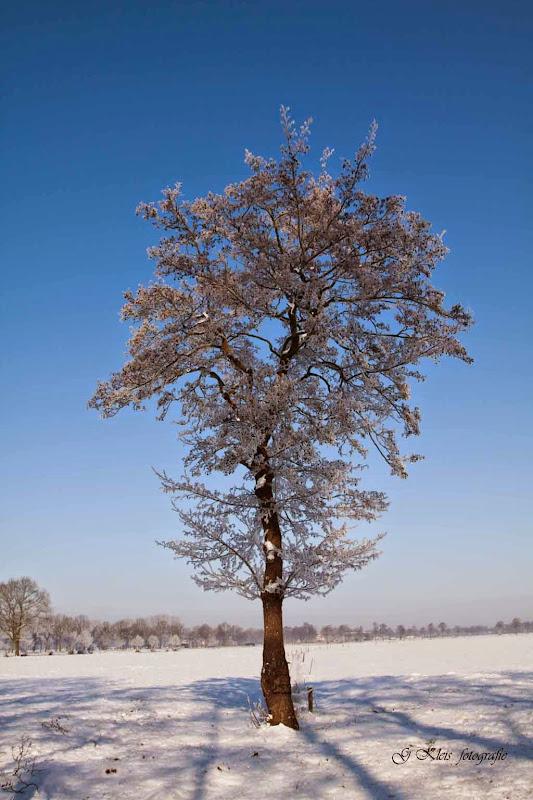 Winter - Winter-045.jpg