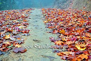 Những cánh rừng lá đỏ - Hồ Hương