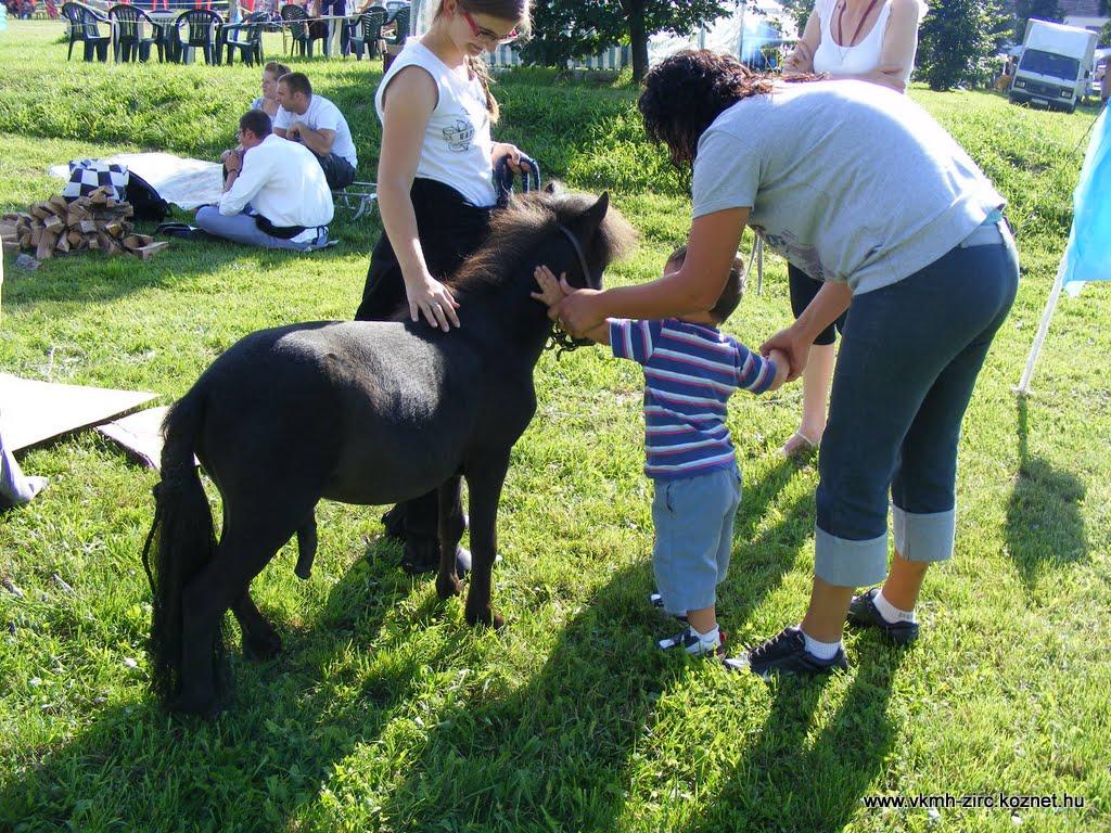 Falabella-a világ legkisebb lófajtája.jpg rel=