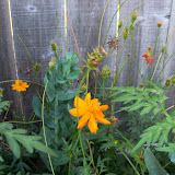 Gardening 2011 - 100_9269.JPG