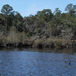 Fowl Marsh from Boat Feb3 2013 112