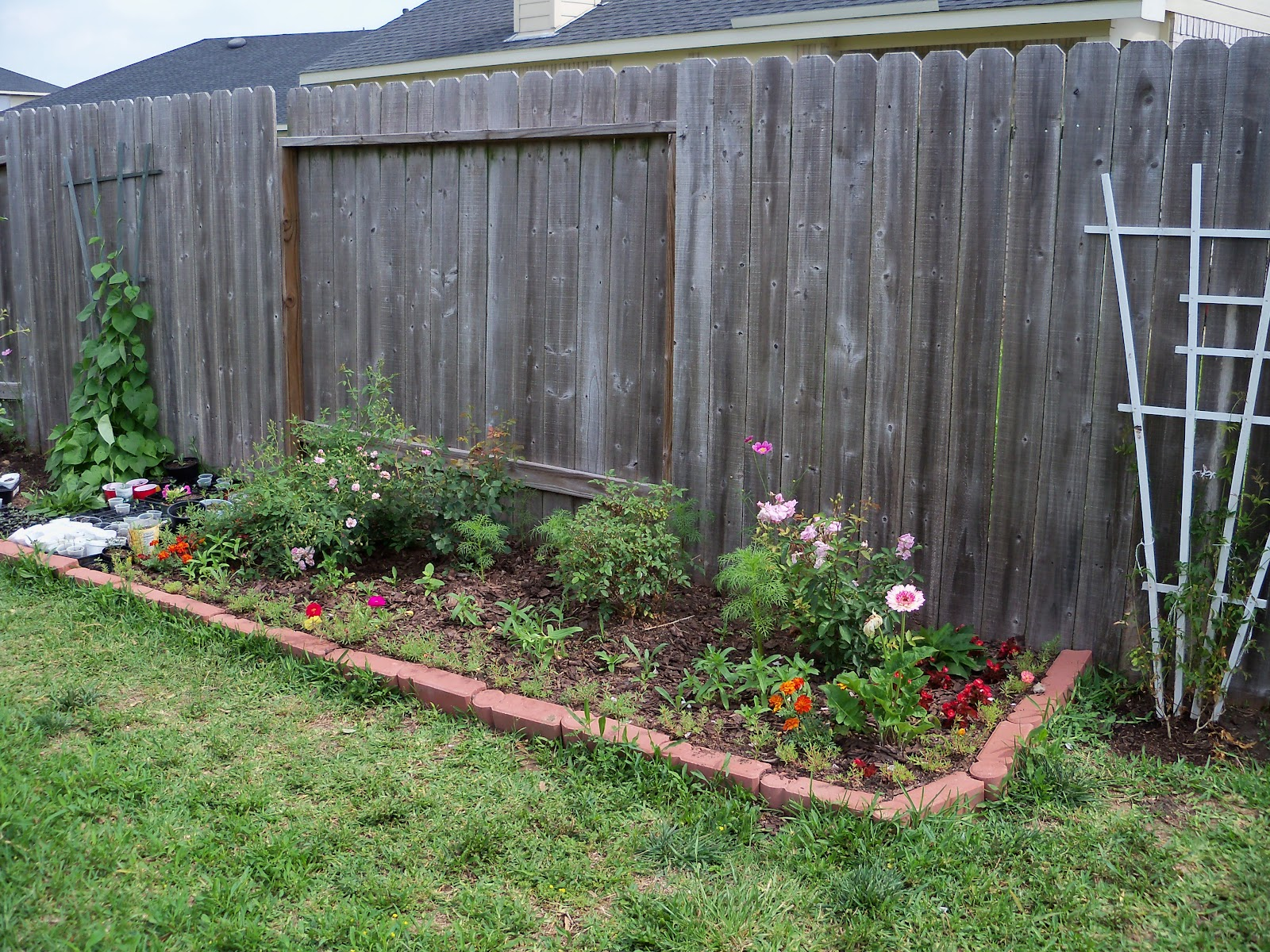 Gardening 2010 - 101_1615.JPG