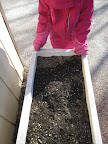 Child looks in garden box for signs of sprouting seeds.