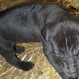 Gretta & Cobalt Blues 3/24/12 litter - SAM_3433.JPG