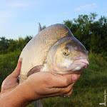 20140624_Fishing_BasivKut_013.jpg