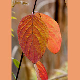 leaves_MG_2136-copy.jpg