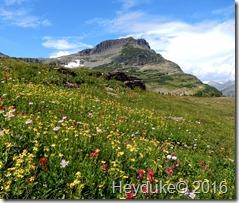 Hidden Lake Trail Glacier NP MT 057