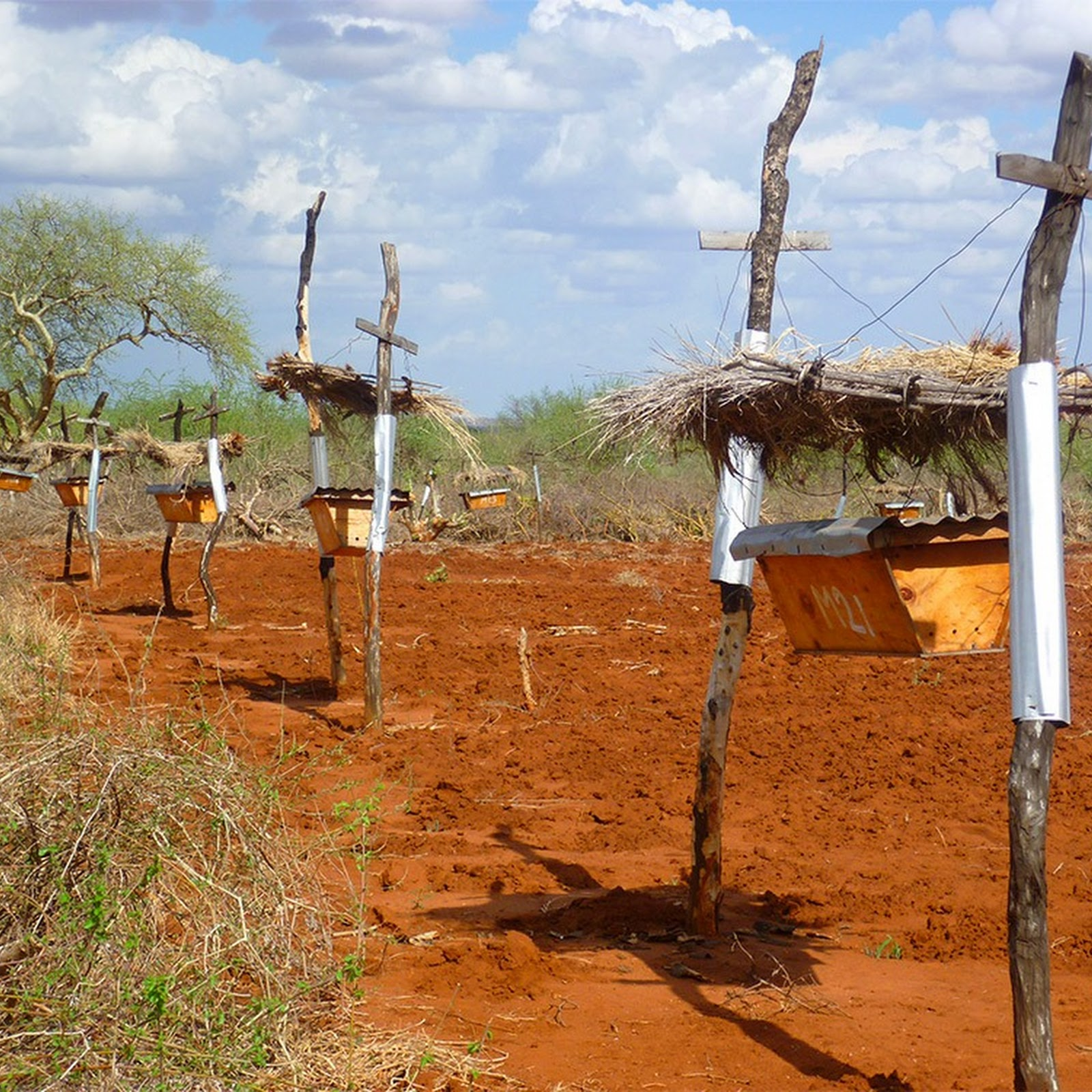 Beehive Fences: Using Bees To Keep Elephants Away From Crops