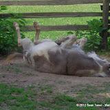 05-11-12 Wildlife Prairie State Park IL - IMGP1615.JPG