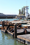 Sea lion colony at Pier 39 (© 2010 Bernd Neeser)