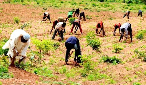 We're not living comfortable, Bandits tax us before allowing us access to our farms – North-West farmers Cries Out