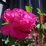 Gardening 2013 - 115_6199.JPG