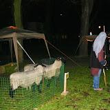 Herdertjestocht Hillegom 2014 - IMG_5710.JPG