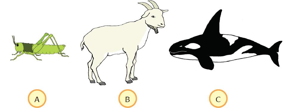 Kunci Jawaban Halaman 60, 61, 62, 63, 65, 66 Tema 5 Kelas 5