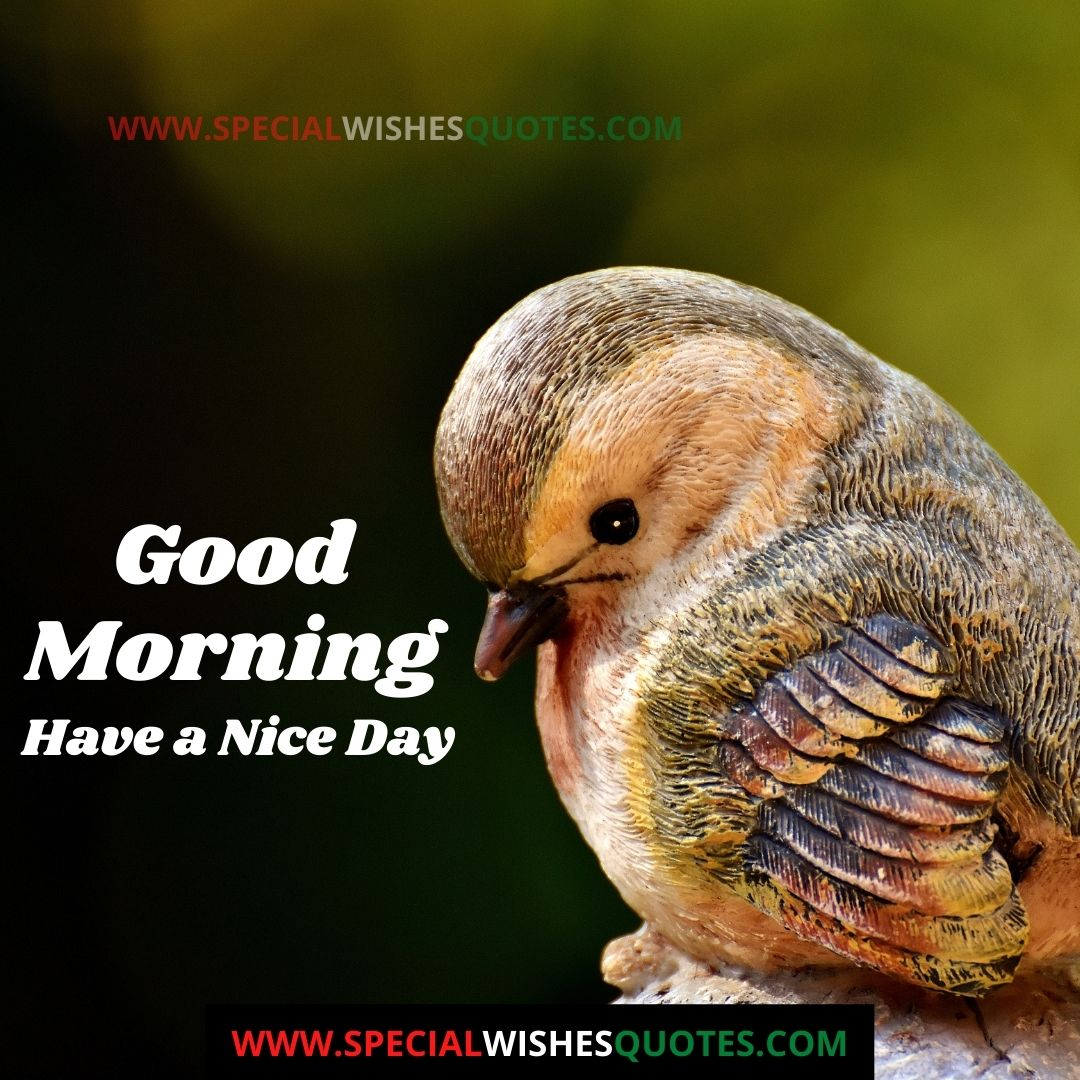 good morning have a nice day hd