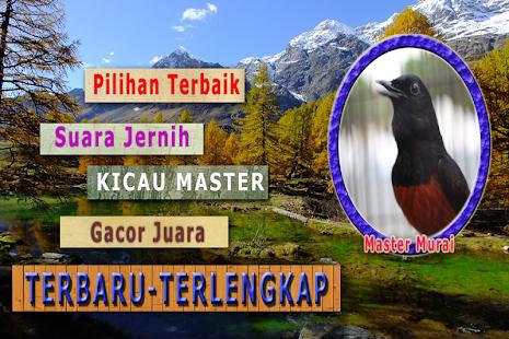 Murai Batu Masteran MP3 - náhled