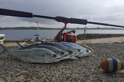 Popping Cork Teknik Mancing dari Amerika yang Super Ampuh untuk Ikan Pelagis
