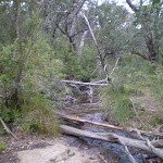 There are occassional obstacles along the trail (31759)