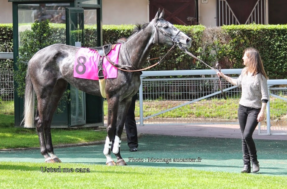 Photos Auteuil le 04-05-2014 Usted