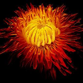 by Mario Pavlić - Flowers Single Flower