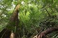 Rainforest view | photo © Robbie Shone