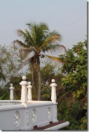 Ланка (259)