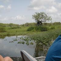 Seabase 2012 - 2012%7E07%7E25 17 Swamp 9.jpg