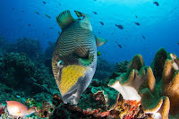Nusa Penida, Snorkling in Nusa Penida, manta point, Bali, snorkling