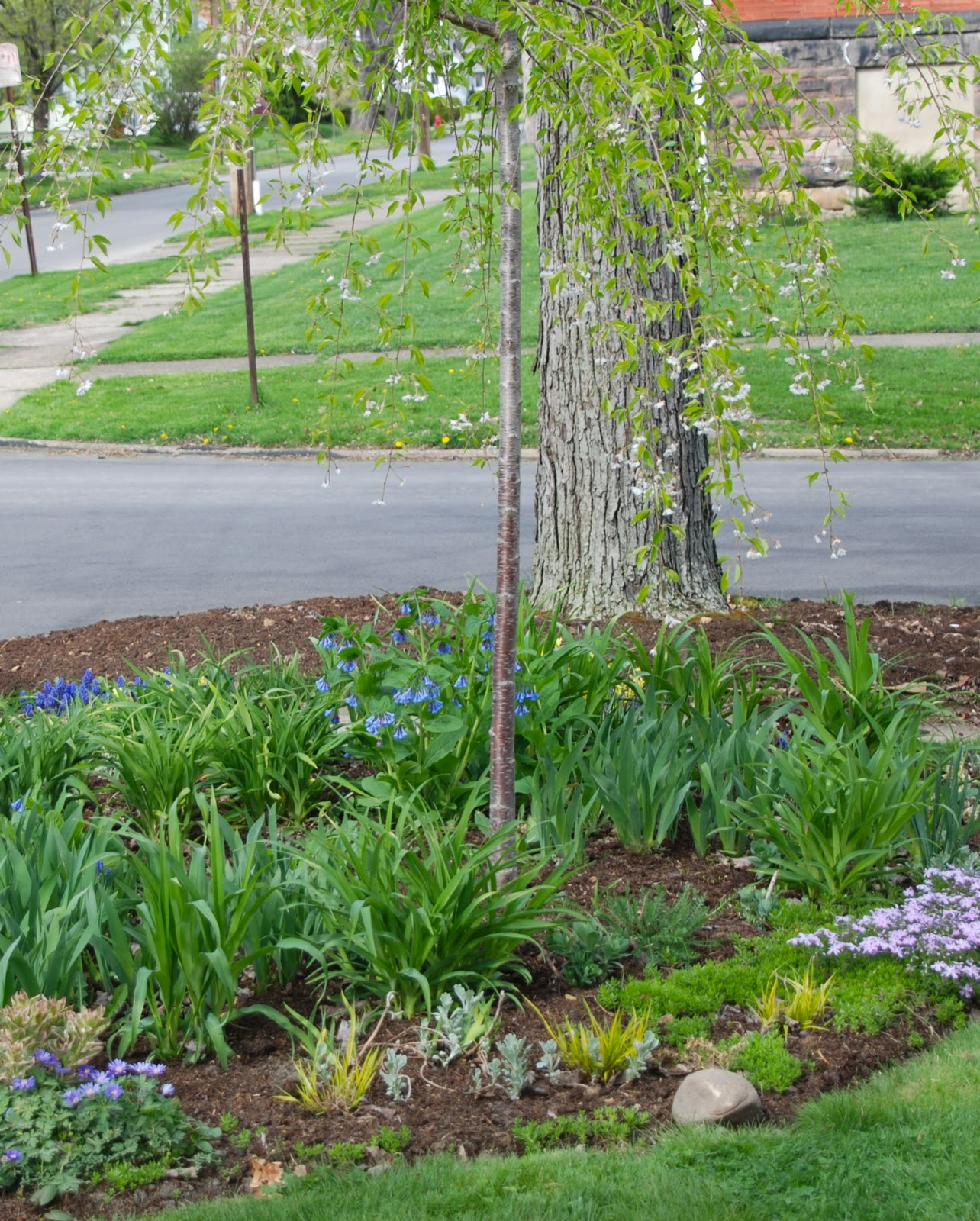 cherry corner april 2010