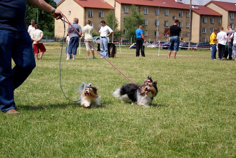 Wystawa psów - dsc00352.jpg