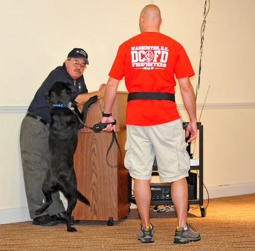 dog-training photo:dog training columbia sc