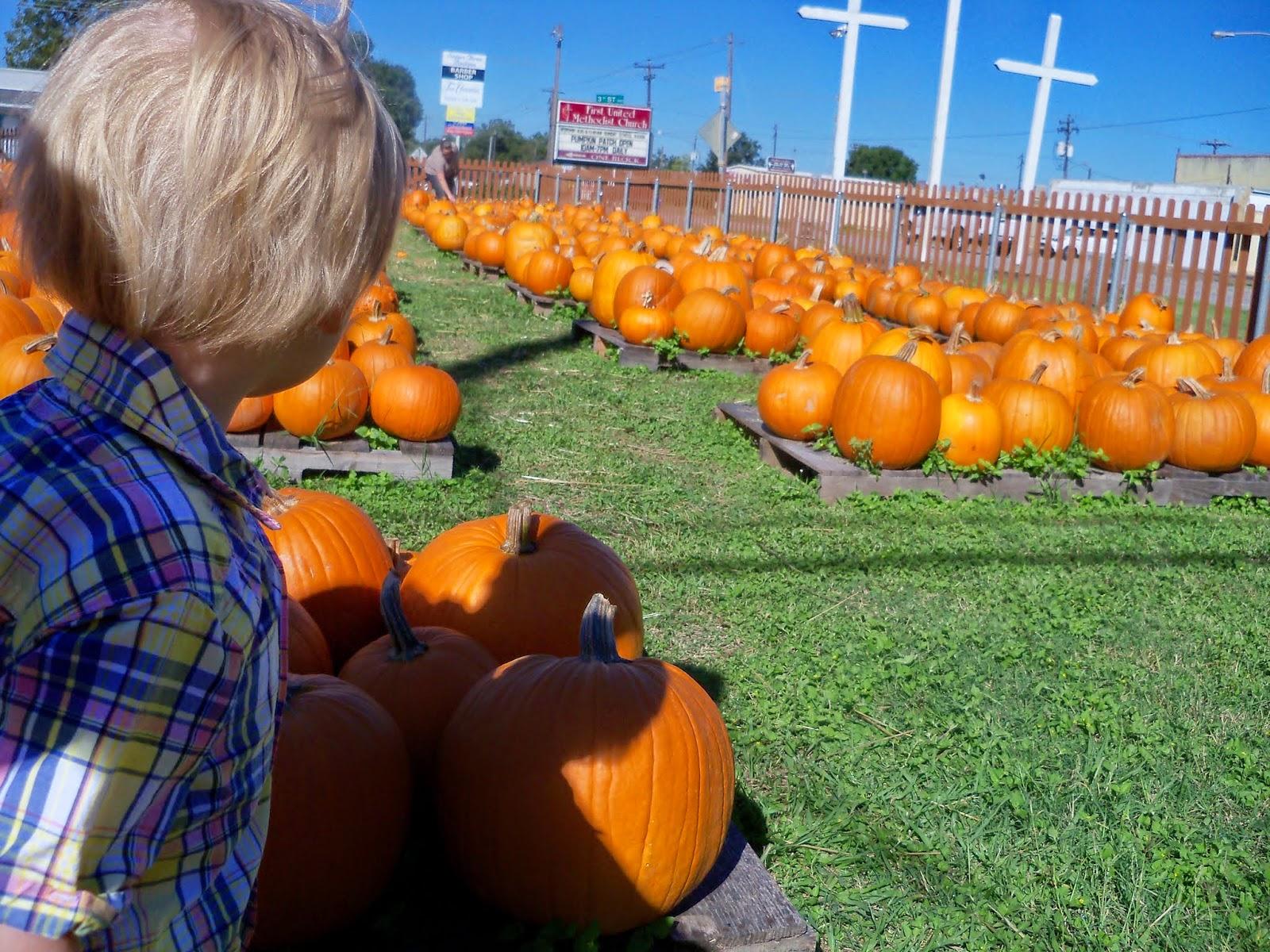 Pumpkin Patch 2014 - 116_4470.JPG