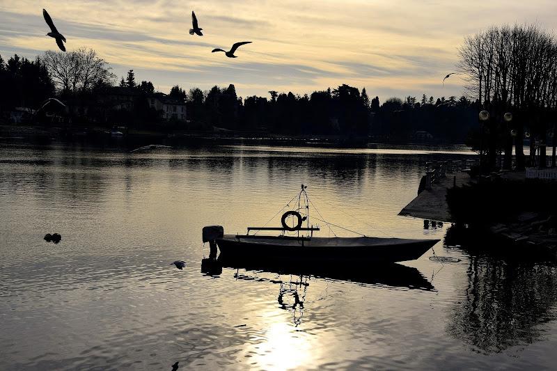 Riflessi sul fiume di Niki
