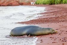 Ecuador-Galapagos-SeymourRabida-180218-0238-ToWeb