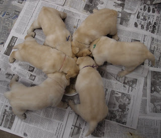 Gathered around the food plate at 4 weeks old.