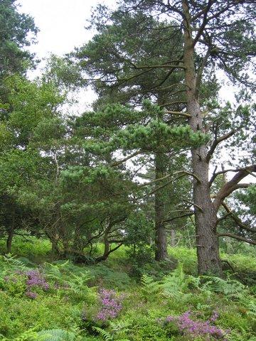 41 trees2