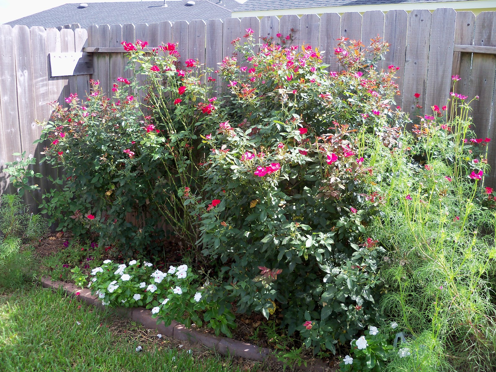Gardening 2010, Part Three - 101_5025.JPG