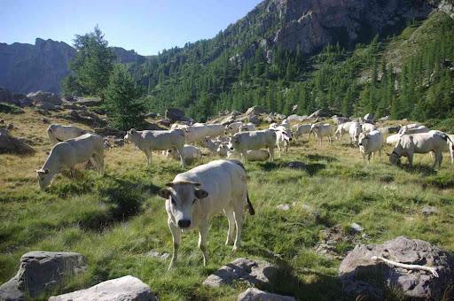 La vallée de Fontanalbe