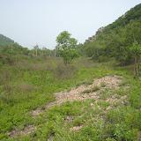 Biotope de Parnassius bremeri le long de la voie ferrée à Narichnyi (à l'ouest de Partizansk, Primorskij Kraj), 22 juin 2011. Photo : G. Charet