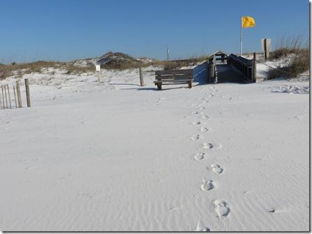 grayton beach16