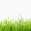 dewy_grass_hd1080p.png