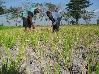 Luasan Tanah Pertanian
